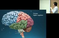 Dr. Octavio Choi presents Brain Basics: An Introduction to Cognitive Neuroscience