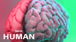 How-Exactly-Is-the-Human-Brain-Organized